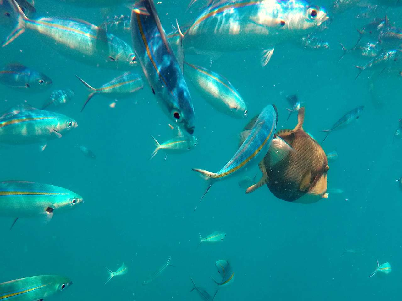 Colourful fish in the warm waters at Beachcomber Island on this great tour on the thunder jet in Fiji