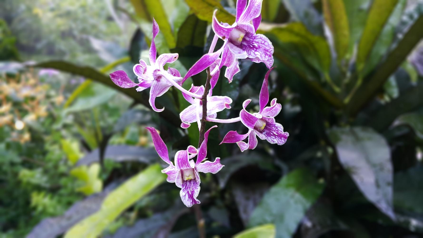 Beautiful orchids at gardens on private tour in Nadi Fiji - Best thing to do in Fiji